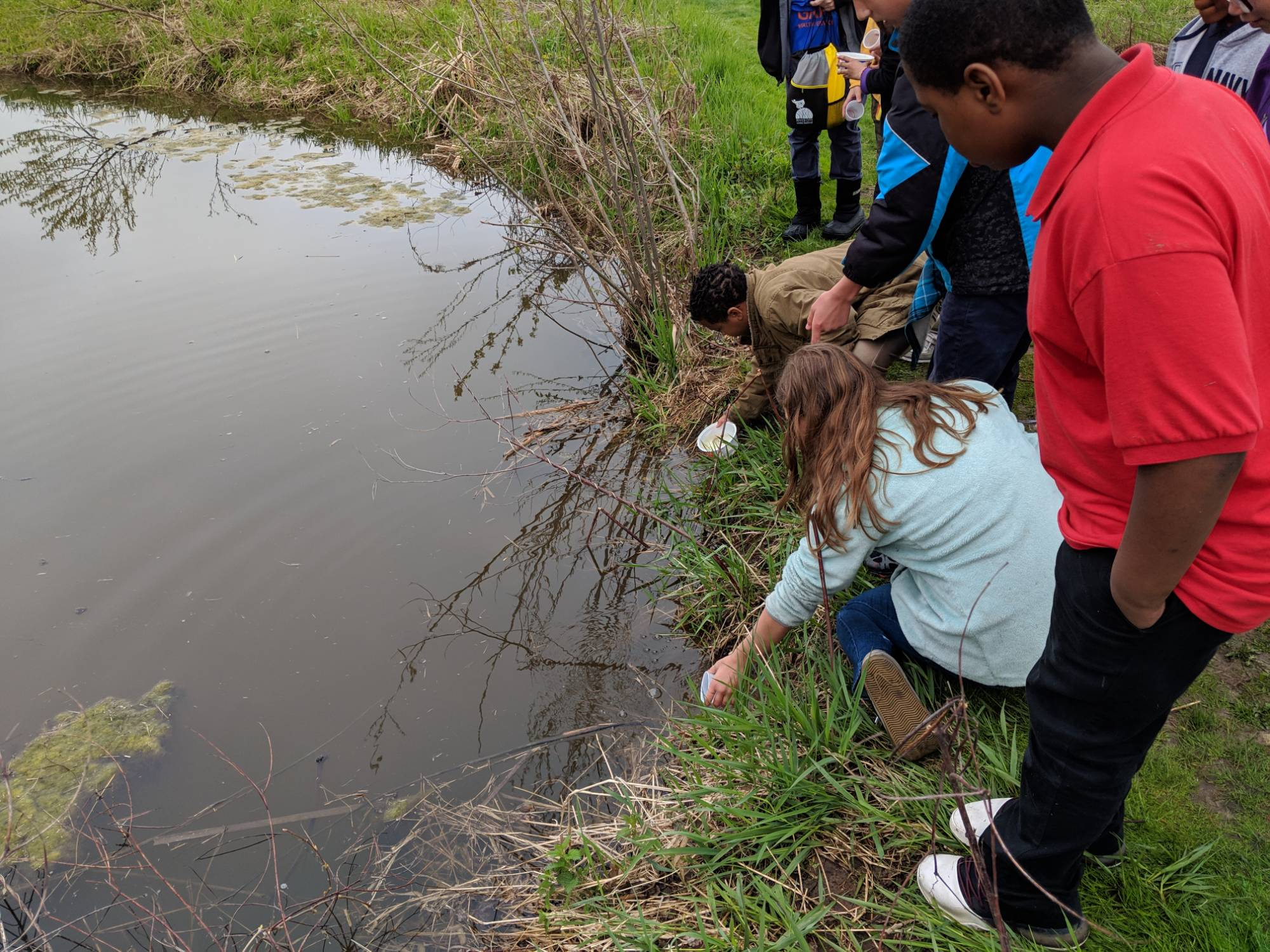 Students from Grand Rapids Montessori school release salmon into a stream at Roselle Park